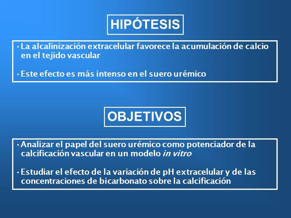 HIPÓTESIS La alcalinización extracelular favorece la acumulación de calcio. en el tejido vascular.