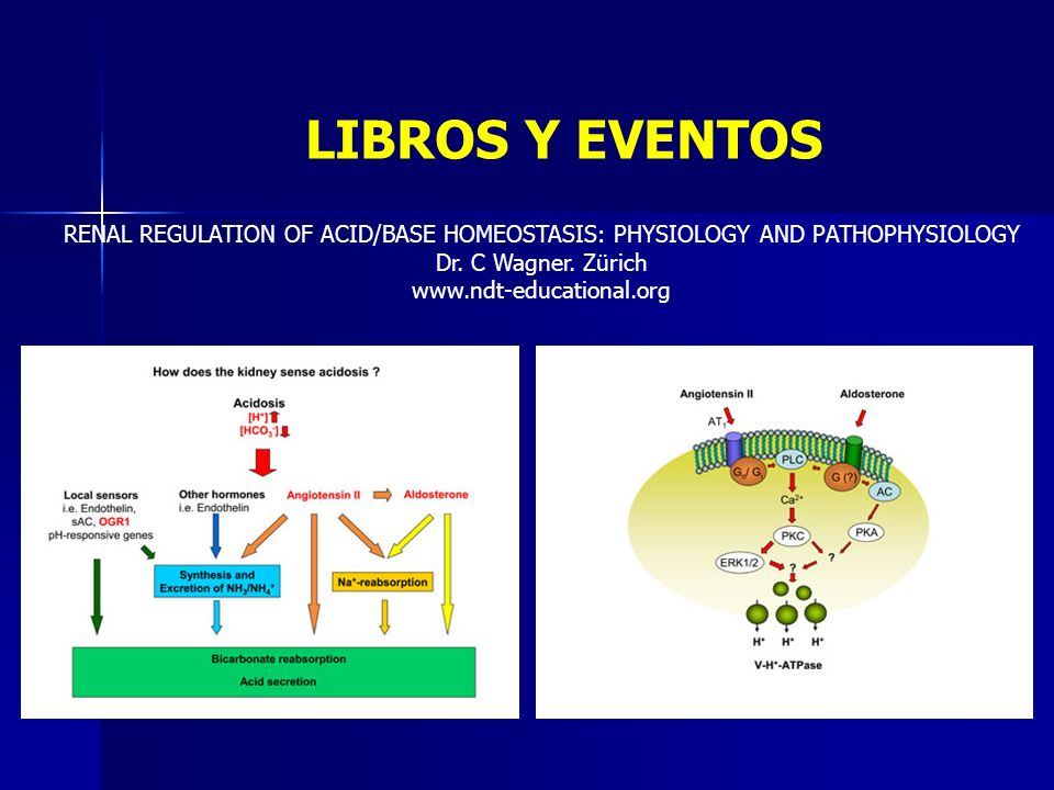 LIBROS Y EVENTOS RENAL REGULATION OF ACID/BASE HOMEOSTASIS: PHYSIOLOGY AND PATHOPHYSIOLOGY. Dr. C Wagner. Zürich.