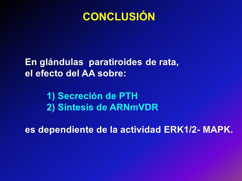 CONCLUSIÓN En glándulas paratiroides de rata, el efecto del AA sobre: