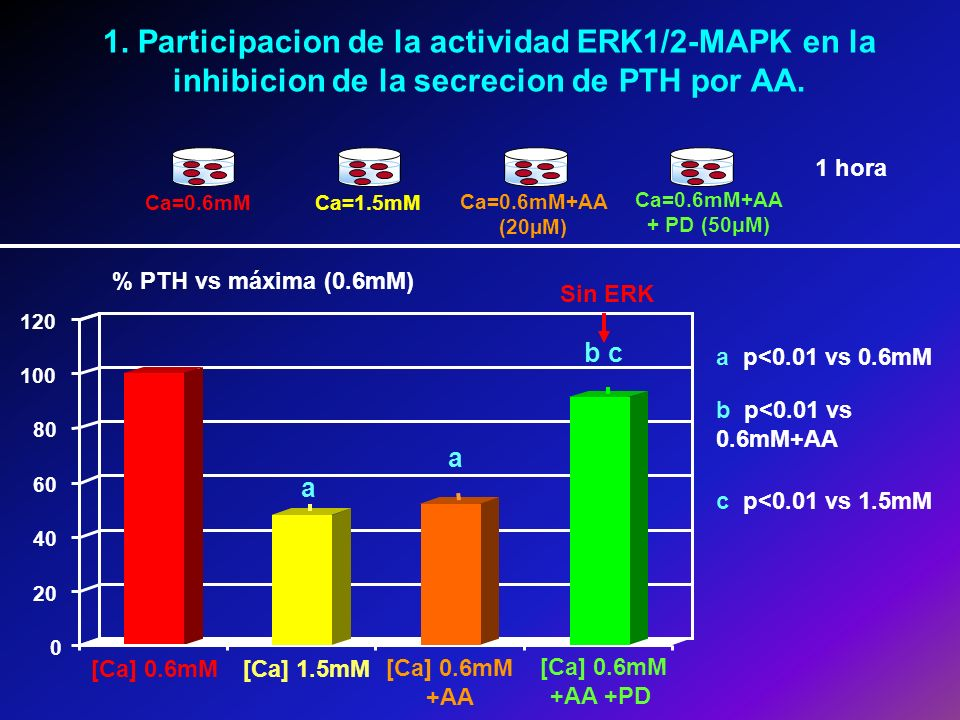 1. Participacion de la actividad ERK1/2-MAPK en la inhibicion de la secrecion de PTH por AA.
