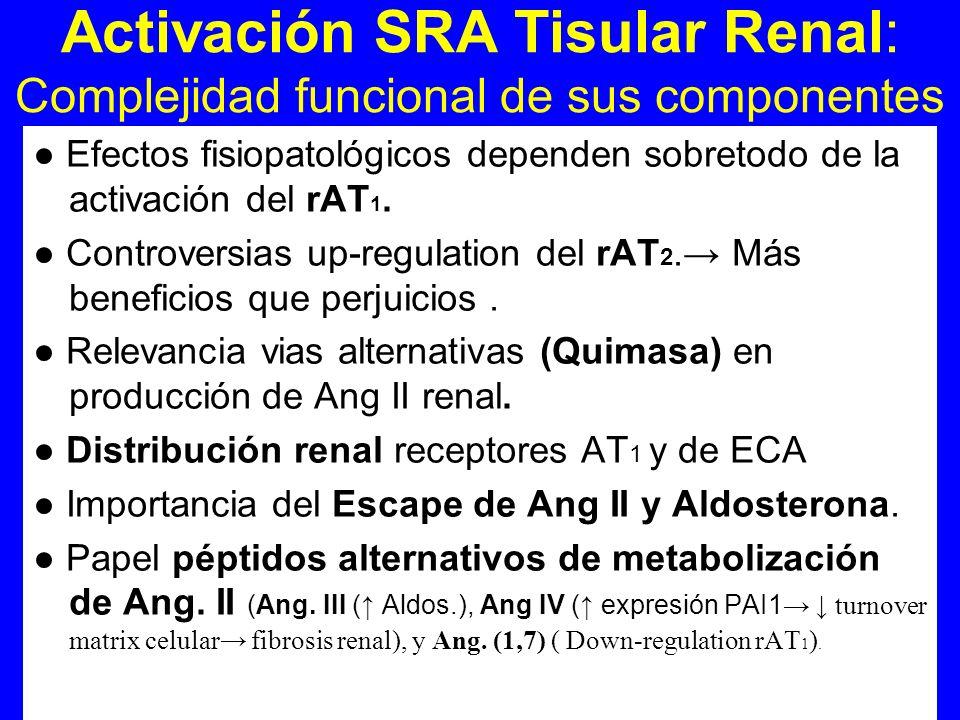 Activación SRA Tisular Renal: Complejidad funcional de sus componentes