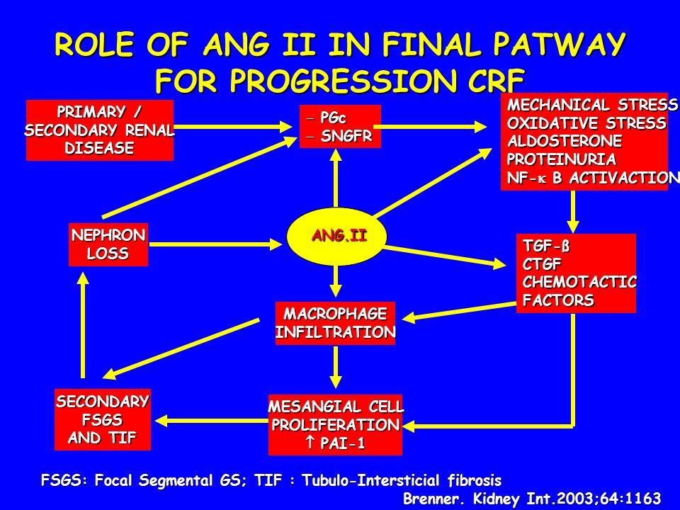 ROLE OF ANG II IN FINAL PATWAY FOR PROGRESSION CRF