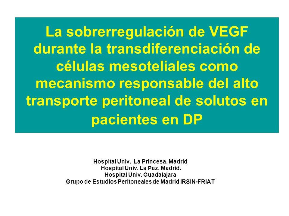La sobrerregulación de VEGF durante la transdiferenciación de células mesoteliales como mecanismo responsable del alto transporte peritoneal de solutos en pacientes en DP