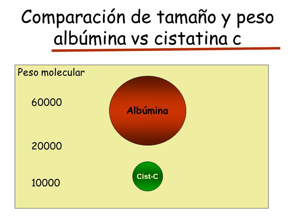 Comparación de tamaño y peso albúmina vs cistatina c