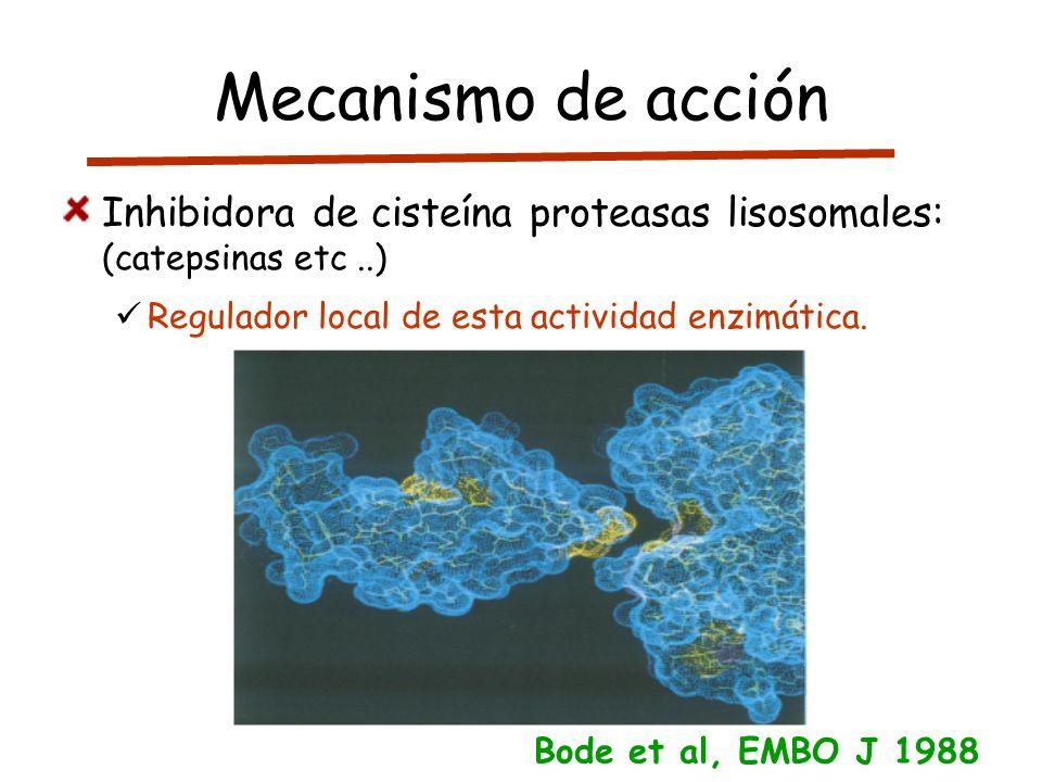 Mecanismo de acciónInhibidora de cisteína proteasas lisosomales: (catepsinas etc ..) Regulador local de esta actividad enzimática.