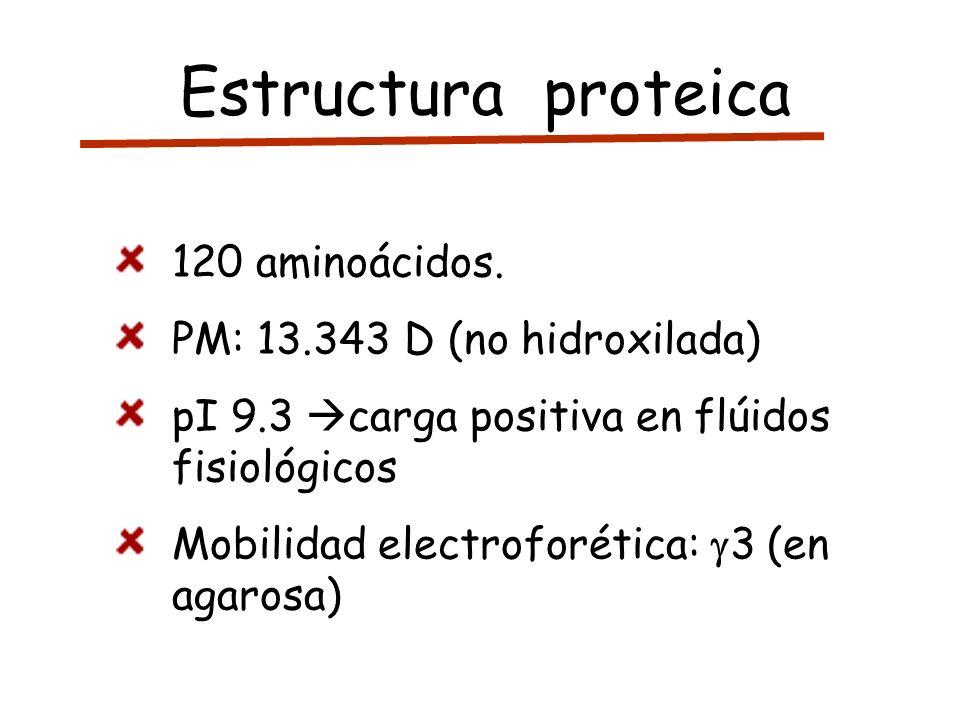 Estructura proteica 120 aminoácidos. PM: 13.343 D (no hidroxilada)