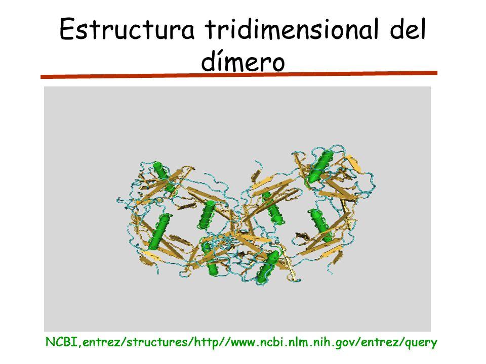 Estructura tridimensional del dímero