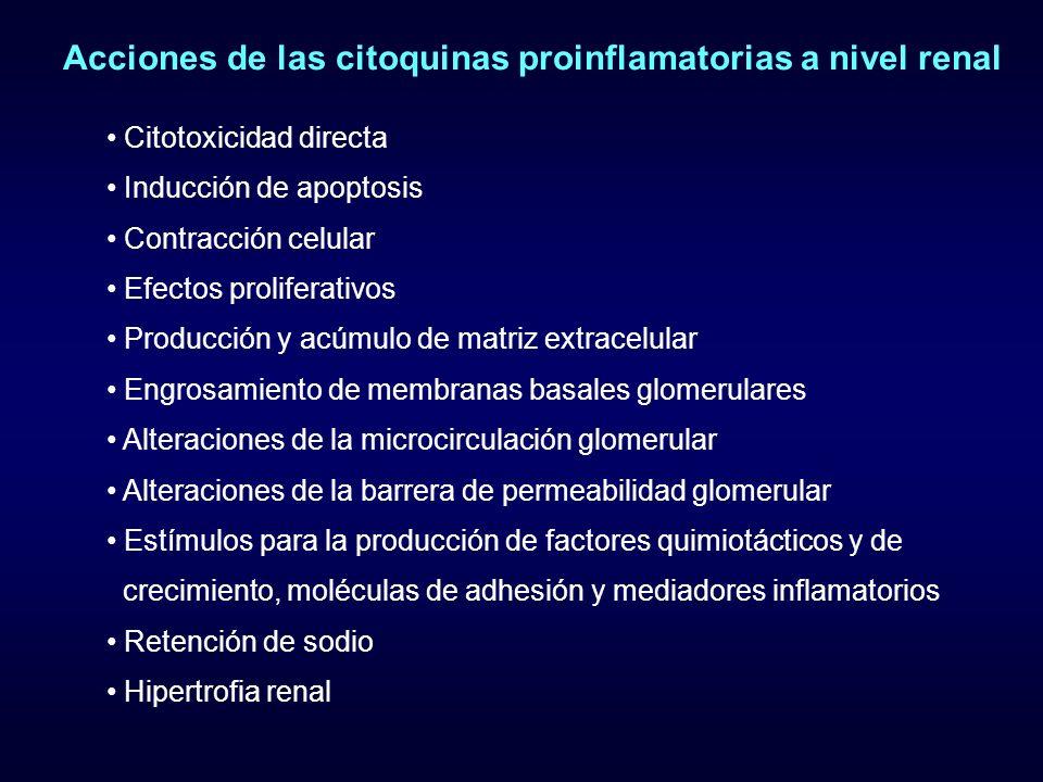 Acciones de las citoquinas proinflamatorias a nivel renal