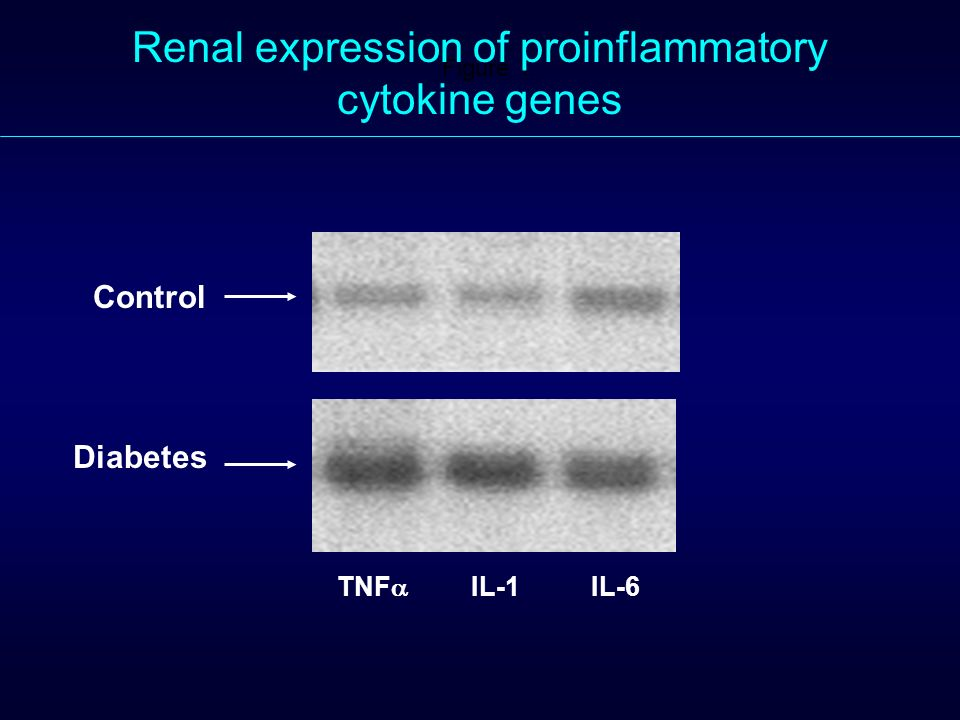 Renal expression of proinflammatory