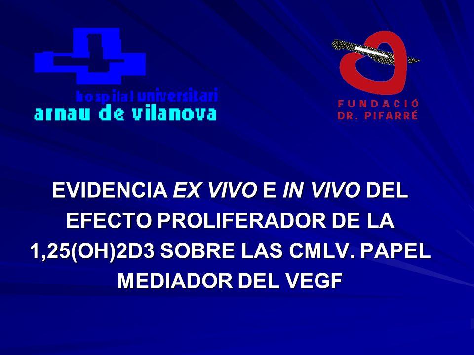 EVIDENCIA EX VIVO E IN VIVO DEL EFECTO PROLIFERADOR DE LA 1,25(OH)2D3 SOBRE LAS CMLV.
