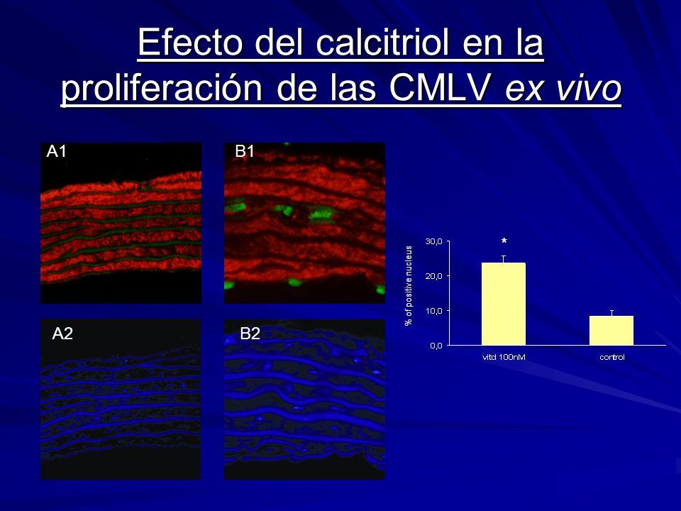 Efecto del calcitriol en la proliferación de las CMLV ex vivo