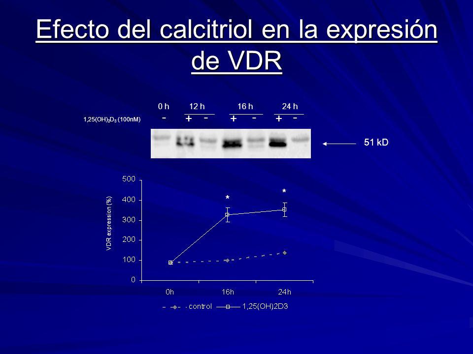Efecto del calcitriol en la expresión de VDR