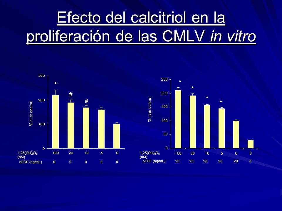 Efecto del calcitriol en la proliferación de las CMLV in vitro