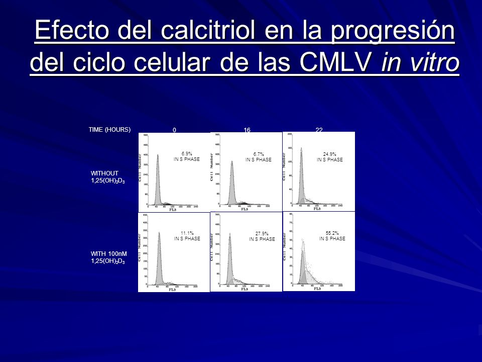 Efecto del calcitriol en la progresión del ciclo celular de las CMLV in vitro