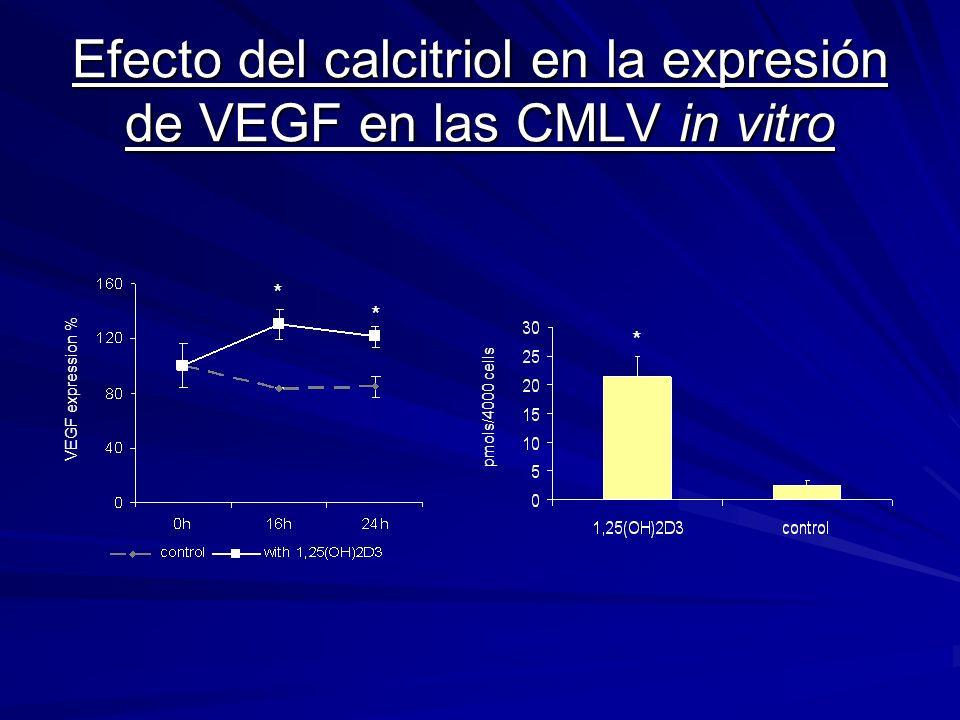 Efecto del calcitriol en la expresión de VEGF en las CMLV in vitro