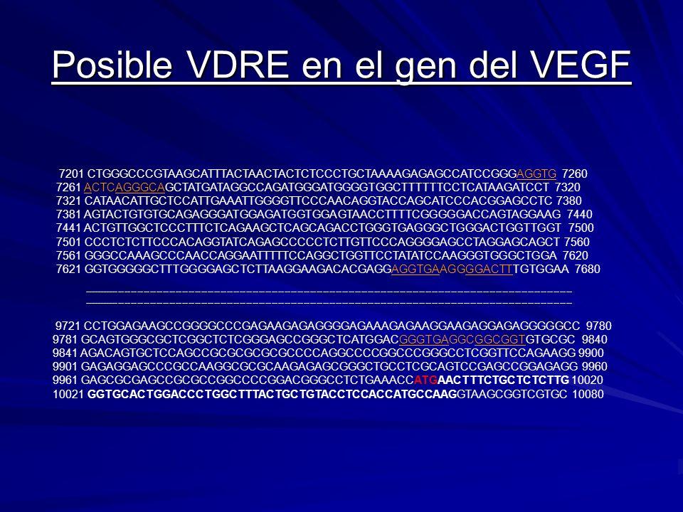 Posible VDRE en el gen del VEGF