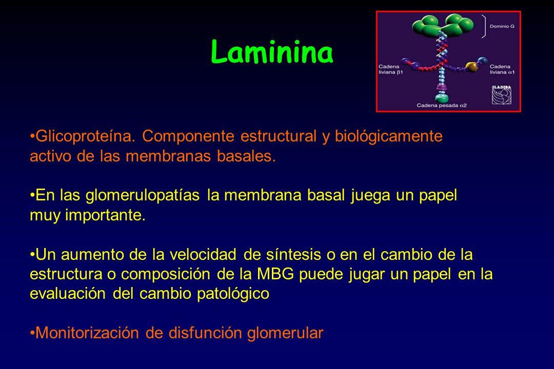 Laminina Glicoproteína. Componente estructural y biológicamente
