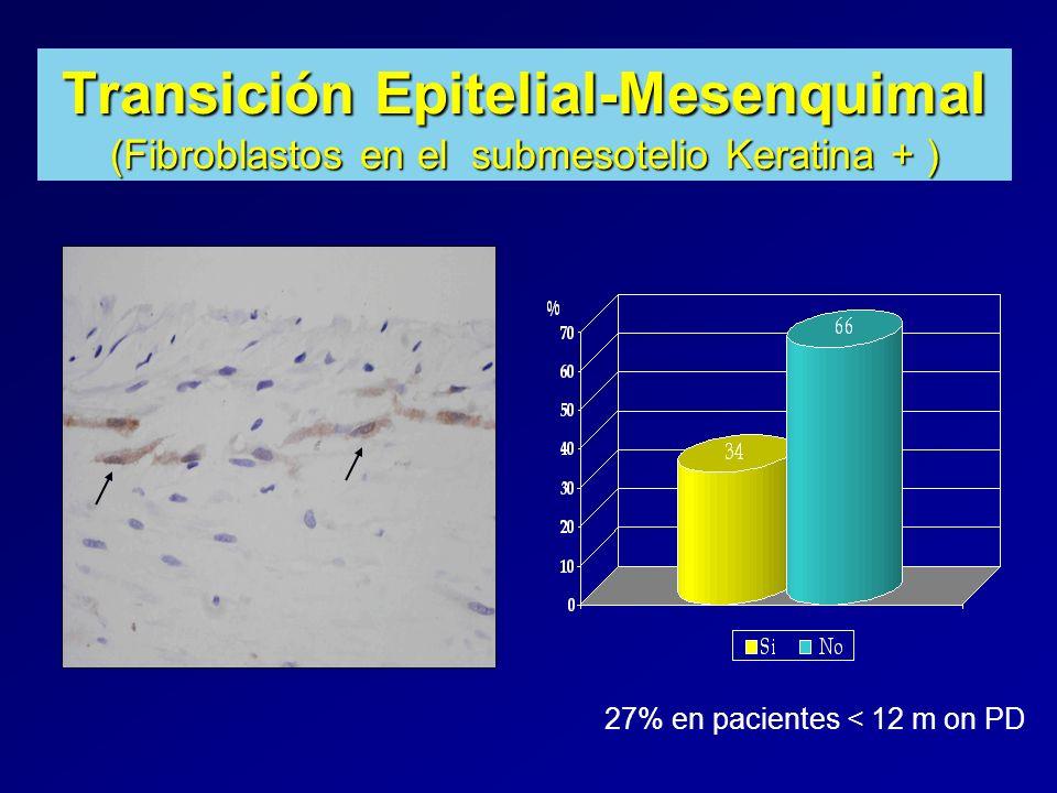 Transición Epitelial-Mesenquimal (Fibroblastos en el submesotelio Keratina + )