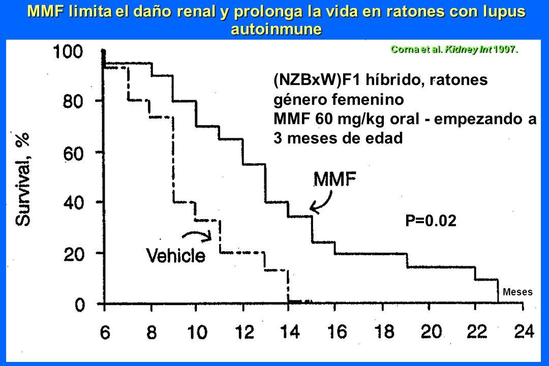 (NZBxW)F1 híbrido, ratones género femenino