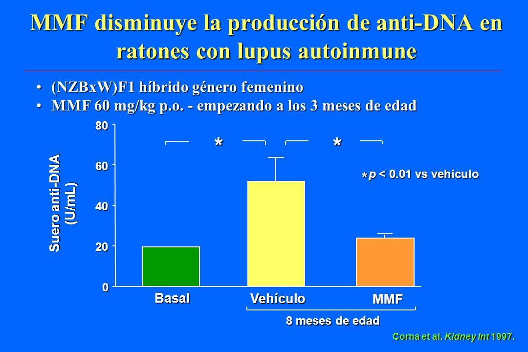 MMF disminuye la producción de anti-DNA en ratones con lupus autoinmune