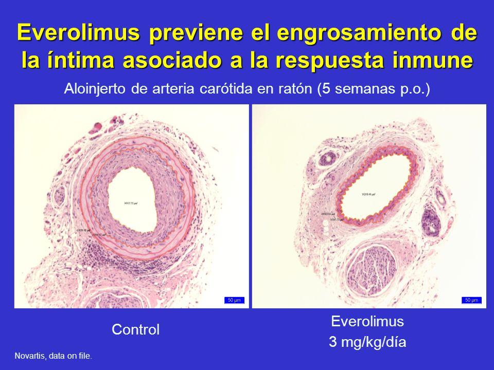Aloinjerto de arteria carótida en ratón (5 semanas p.o.)