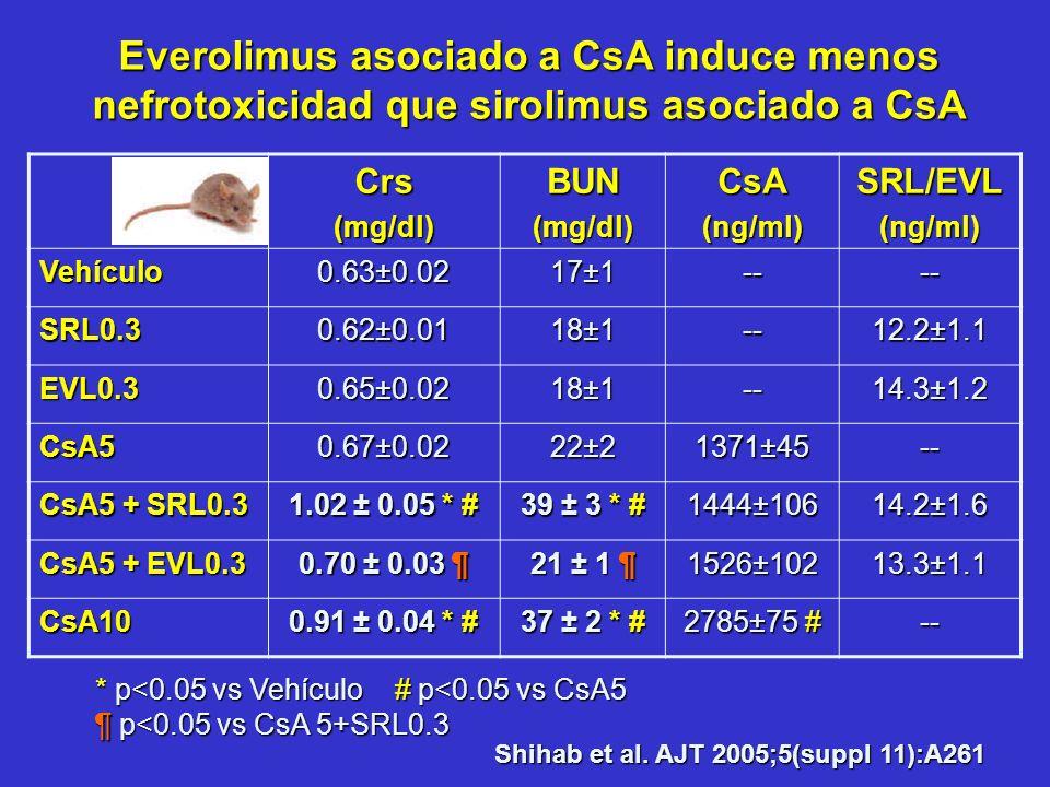 Everolimus asociado a CsA induce menos nefrotoxicidad que sirolimus asociado a CsA