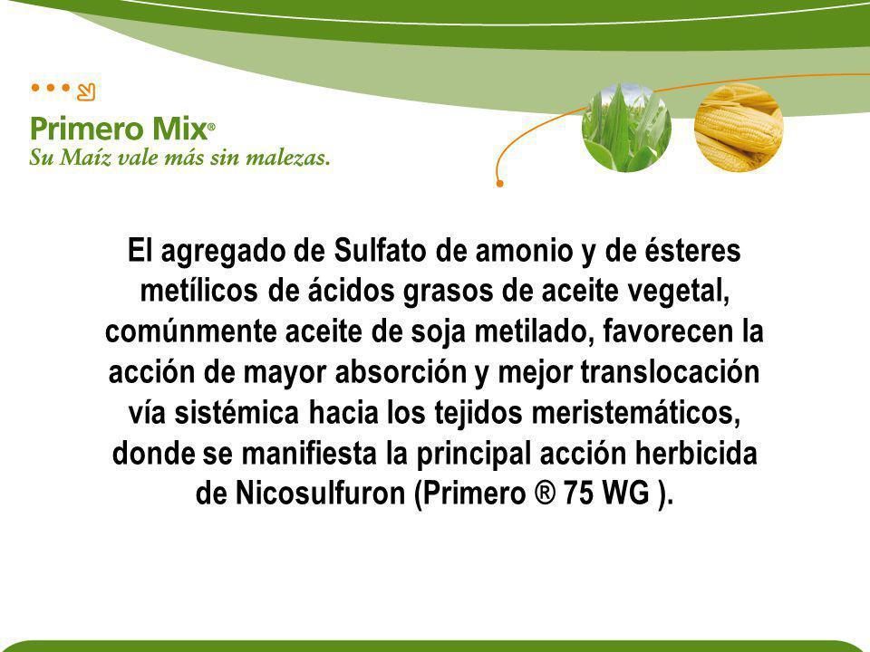 El agregado de Sulfato de amonio y de ésteres metílicos de ácidos grasos de aceite vegetal, comúnmente aceite de soja metilado, favorecen la acción de mayor absorción y mejor translocación vía sistémica hacia los tejidos meristemáticos, donde se manifiesta la principal acción herbicida de Nicosulfuron (Primero ® 75 WG ).