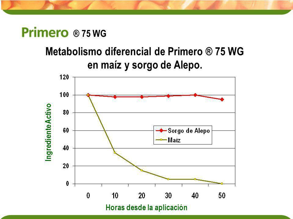 Metabolismo diferencial de Primero ® 75 WG
