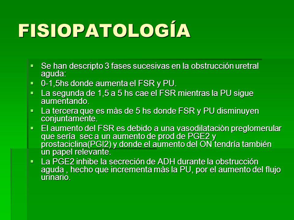 FISIOPATOLOGÍA Se han descripto 3 fases sucesivas en la obstrucción uretral aguda: 0-1,5hs donde aumenta el FSR y PU.