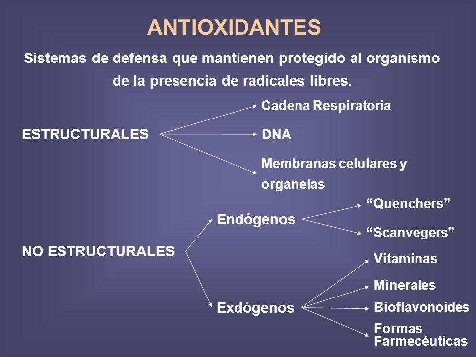 ANTIOXIDANTES Sistemas de defensa que mantienen protegido al organismo de la presencia de radicales libres.