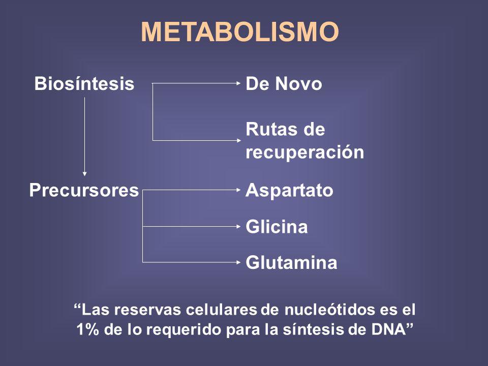 METABOLISMO Biosíntesis De Novo Rutas de recuperación Precursores