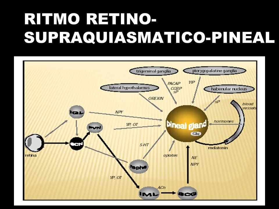 RITMO RETINO-SUPRAQUIASMATICO-PINEAL