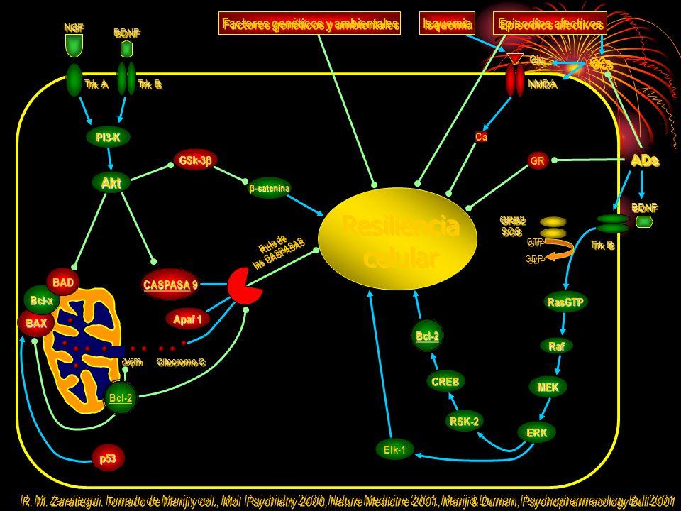 Factores genéticos y ambientales