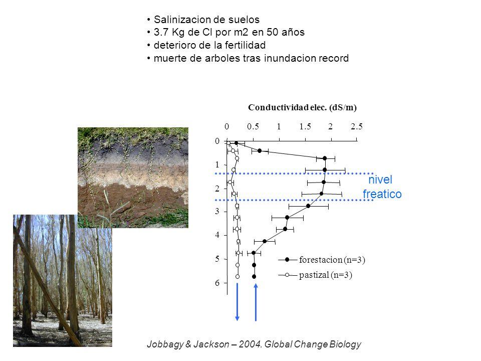 nivel freatico Salinizacion de suelos 3.7 Kg de Cl por m2 en 50 años