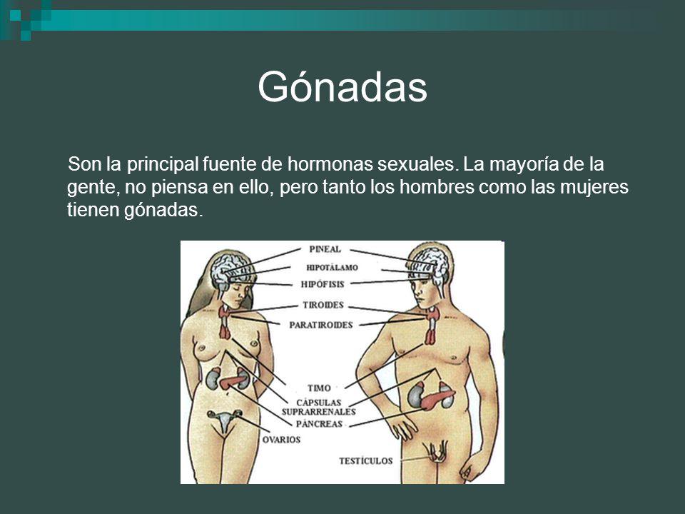 Gónadas
