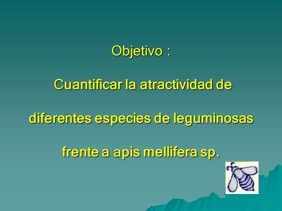 Objetivo : Cuantificar la atractividad de diferentes especies de leguminosas frente a apis mellifera sp.