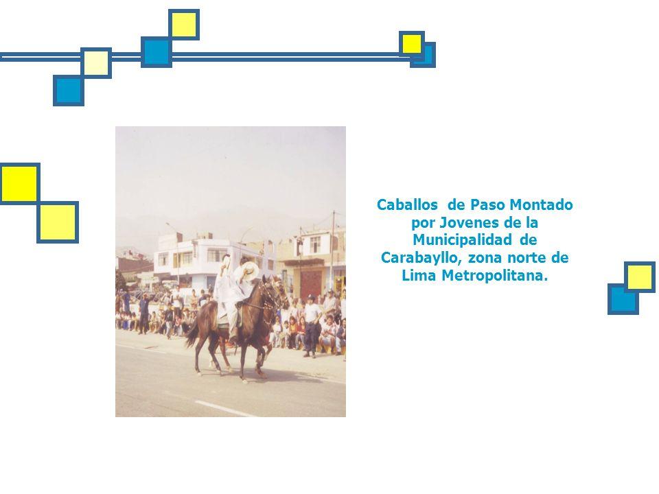 Caballos de Paso Montado por Jovenes de la Municipalidad de Carabayllo, zona norte de Lima Metropolitana.