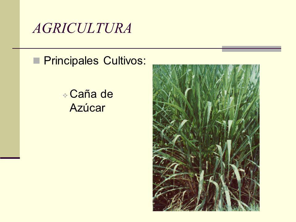 AGRICULTURA Principales Cultivos: Caña de Azúcar