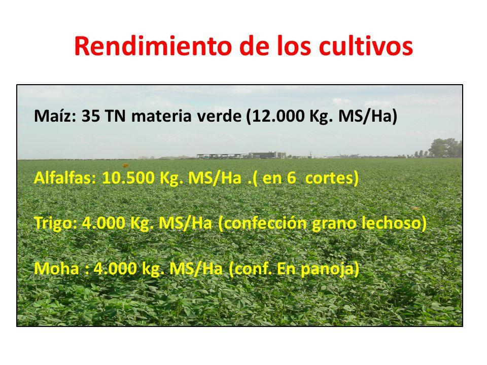 Rendimiento de los cultivos