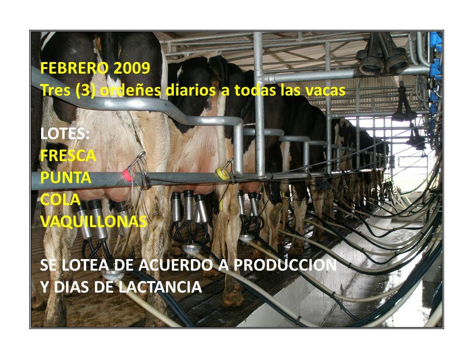 FEBRERO 2009 Tres (3) ordeñes diarios a todas las vacas. LOTES: FRESCA. PUNTA. COLA. VAQUILLONAS.