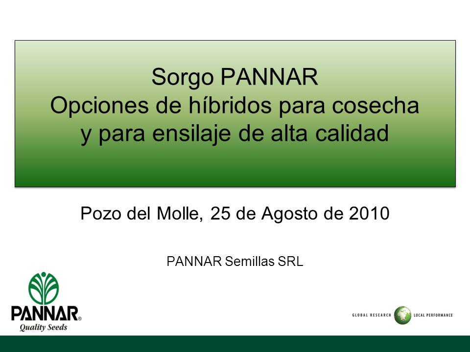 Pozo del Molle, 25 de Agosto de 2010 PANNAR Semillas SRL