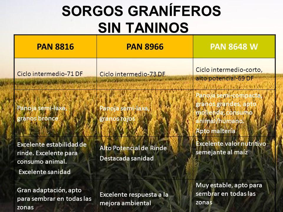 SORGOS GRANÍFEROS SIN TANINOS