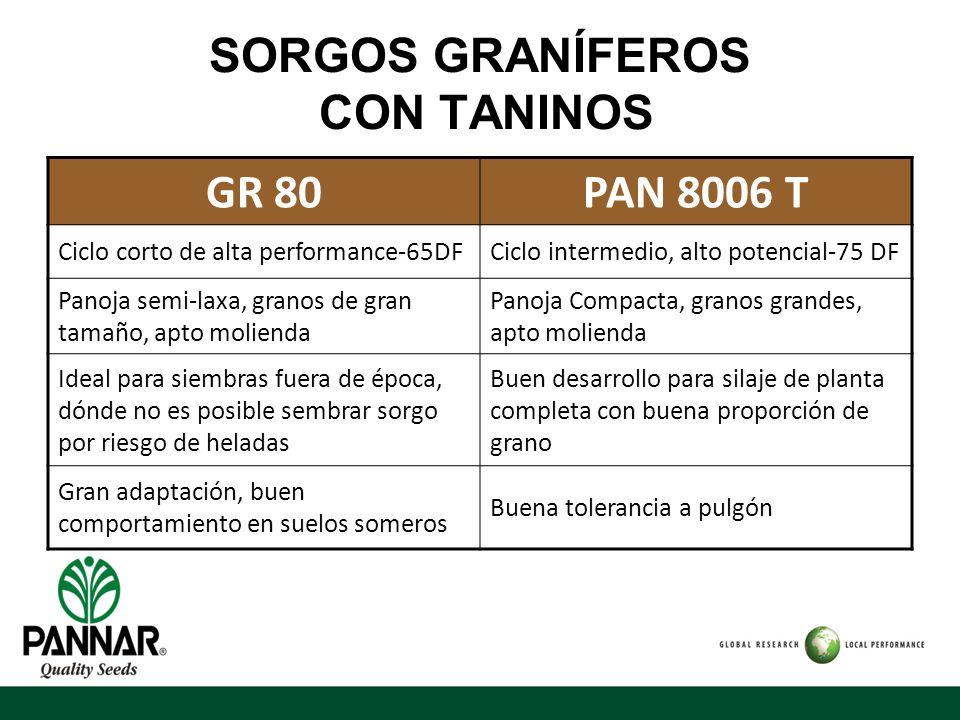 SORGOS GRANÍFEROS CON TANINOS