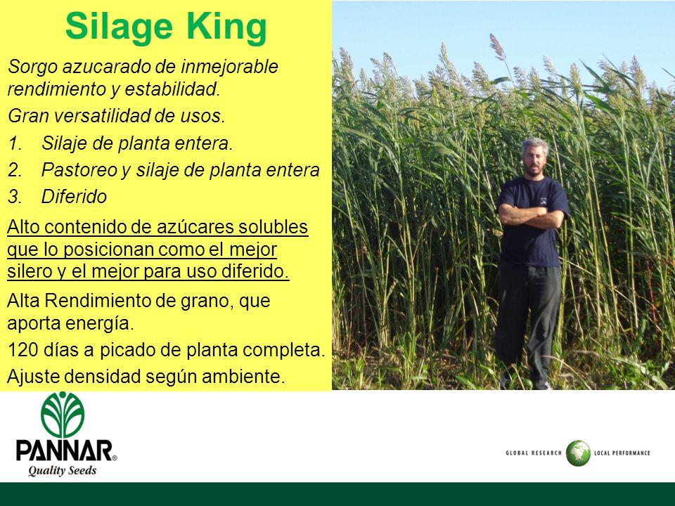 Silage King Sorgo azucarado de inmejorable rendimiento y estabilidad.