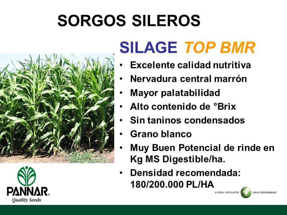 SORGOS SILEROS SILAGE TOP BMR Excelente calidad nutritiva