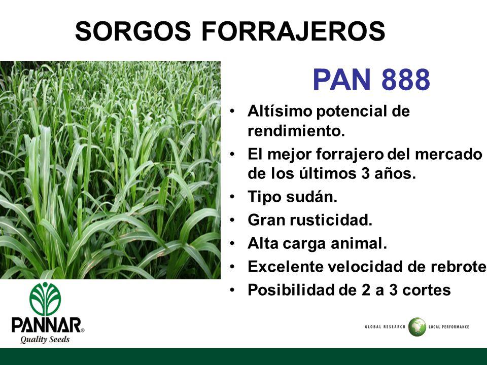 PAN 888 SORGOS FORRAJEROS Altísimo potencial de rendimiento.