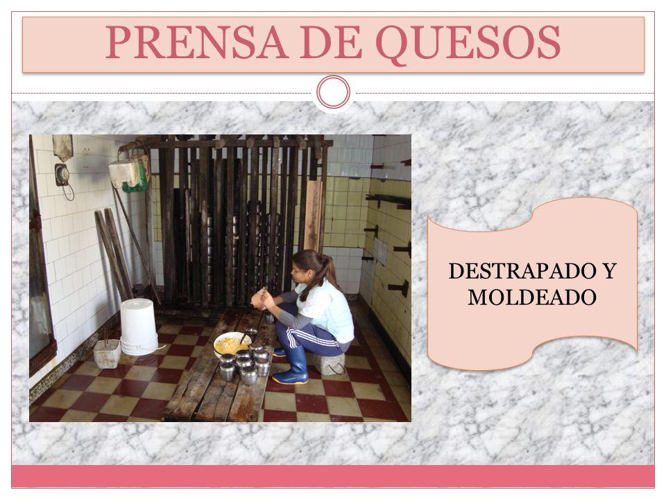 PRENSA DE QUESOS DESTRAPADO Y MOLDEADO