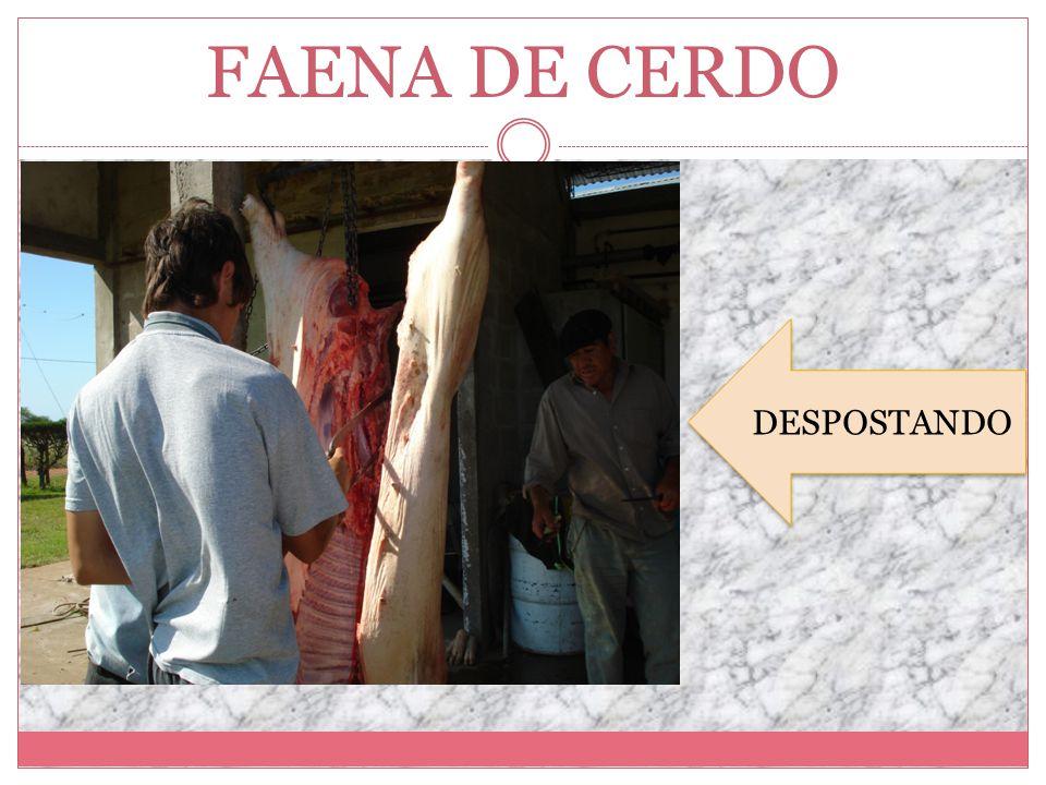 FAENA DE CERDO DESPOSTANDO