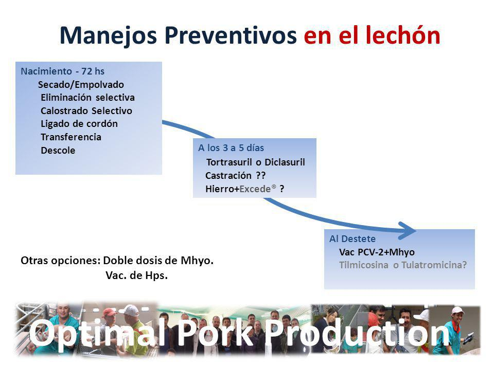 Optimal Pork Production