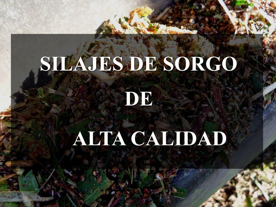 SILAJES DE SORGO DE ALTA CALIDAD
